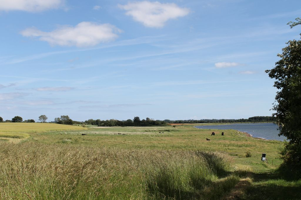 Strandenge - udlagt som NATURA 2000 arealer - naturpleje af græssende køer
